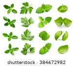 Parsley Herb  Basil Leaves ...