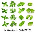 Parsley Herb  Basil Leaves ...