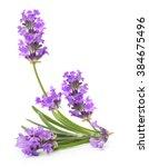 bunch of flowering violet... | Shutterstock . vector #384675496