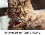 cat in houtong cat village ... | Shutterstock . vector #384770242