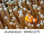 Clown Fish Portrait While...