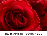 Stock photo beautiful red rose close up macro flower background photo 384834106
