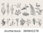 herbs and wild flowers. botany. ... | Shutterstock .eps vector #384842278