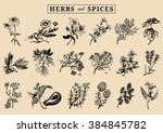 herbs and spices set. hand... | Shutterstock .eps vector #384845782