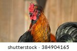 cock on traditional free range... | Shutterstock . vector #384904165