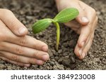 green sprout and children hands | Shutterstock . vector #384923008