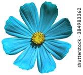 Turquoise Flower Primula Macro...
