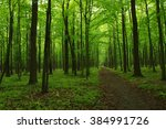 green forest and the path | Shutterstock . vector #384991726