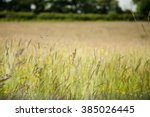 Green Hay Meadow In Summer Wit...