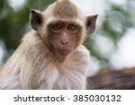cute monkeys a cute monkey... | Shutterstock . vector #385030132