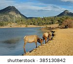elk cows grazing along the... | Shutterstock . vector #385130842
