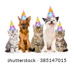 Stock photo large group cats and dogs in birthday hats isolated on white background 385147015