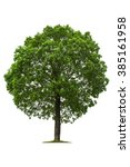 deciduous tree  isolated on... | Shutterstock . vector #385161958