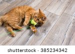 Stock photo portrait of red cat playing with toy 385234342