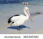 Pelican Standing On The Beach...
