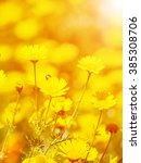 lot of yellow flowers on meadow  | Shutterstock . vector #385308706