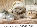 Grumpy Christmas Cats With...