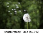 Dandelion in the wind. Dandelion seed head with seeds blowing in the wind. Concept - time - stock photo