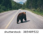 black bear on the road in... | Shutterstock . vector #385489522