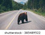 black bear on the road in... | Shutterstock . vector #385489522
