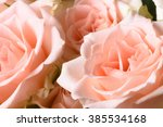 pink creamy natural roses... | Shutterstock . vector #385534168