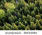 Aerial View Of Trees In New...