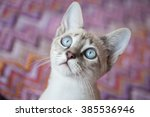 Adorable Blue Eyes Cat With...