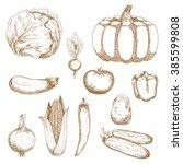farm cabbage and tomato  chilli ...   Shutterstock .eps vector #385599808