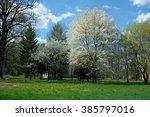 park trees   spring   blossom | Shutterstock . vector #385797016