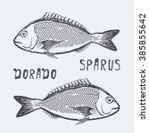 fish dorado sparus vector... | Shutterstock .eps vector #385855642