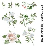 watercolor floral set with... | Shutterstock . vector #385927165
