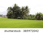 Fresh Terraced Rice Field Over...