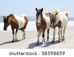 A Group Of Wild Horses Walking...