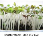sprouts of a basil grow in... | Shutterstock . vector #386119162