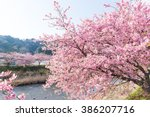 Sakura Tree And River