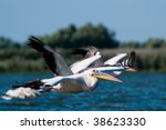 flock of pelicans in flight | Shutterstock . vector #38623330