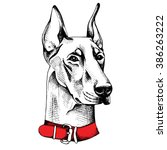 Doberman Portrait With A Red...