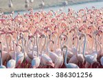 Beautiful And Wild   Flamingos