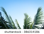 Palm Tree Branches With Cloudy...
