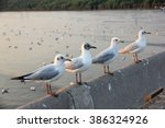 Seagulls Stand Wait Food