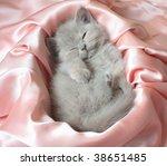 Stock photo kitten 38651485