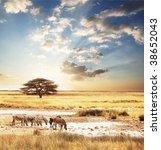 zebra | Shutterstock . vector #38652043