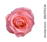 pink roses close up background. | Shutterstock . vector #386550136