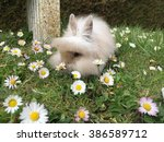 Bunny Lion Head Rabbit Enjoy I...