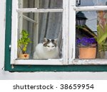 Cat Sitting At A Window And...