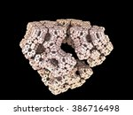 Light Fractal Fungus  Mineral...