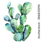 Watercolor Cactus Isolated On...
