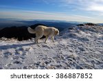 dog with mountain landscape    Shutterstock . vector #386887852