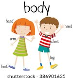 human body parts diagram... | Shutterstock .eps vector #386901625