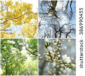 four seasons collage  several... | Shutterstock . vector #386990455